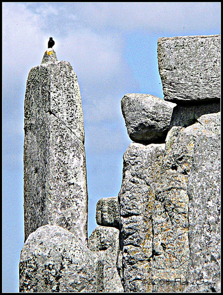 Raven, Stonehenge  <b>Not to be reproduced without the written permission of Florence T. Gray</b>