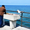 Fisherman Cleaning his Fish While Sea Gull Enjoys the Scraps at Huntington Beach Pier in CA