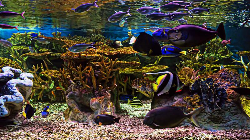 Boston Aquarium