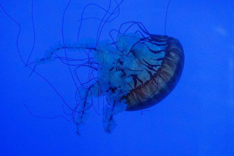 Newport Aquarium, OR