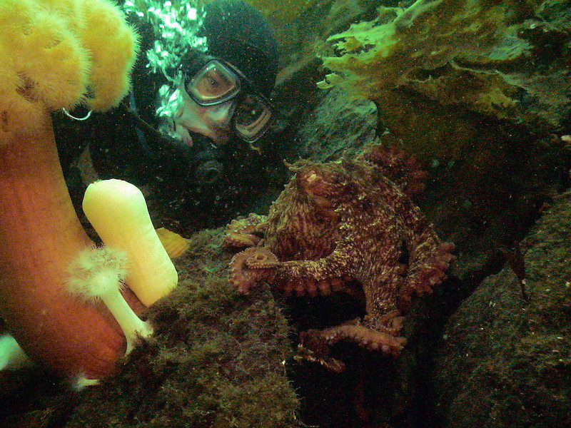Me and Octopus