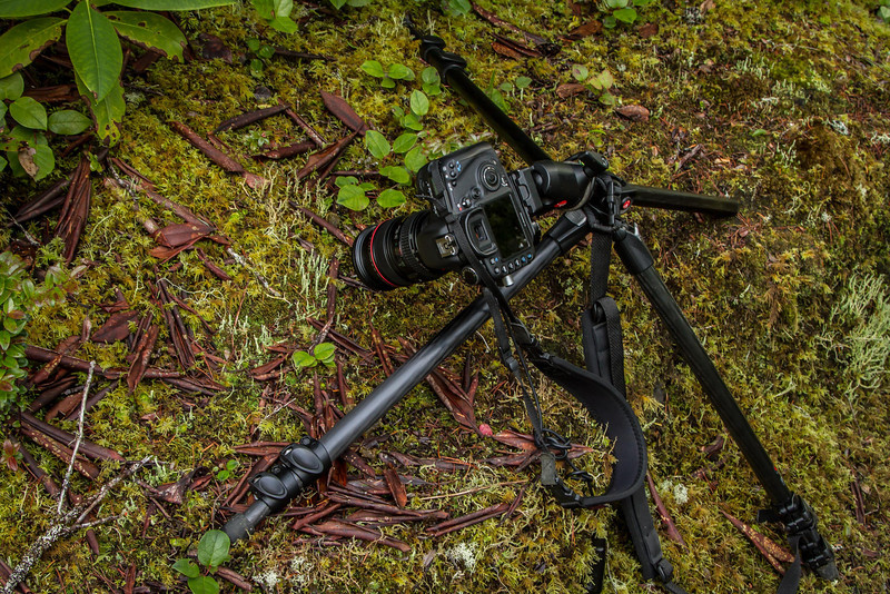 Illustrates that sometimes for macro photography you need a cast-iron back with a hinge in it!<br /> Photo © Cindy Clark