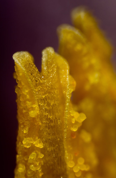 Pillars of creation on a microscopic scale - this is inside an iris' bloom.<br /> Photo © Cindy Clark