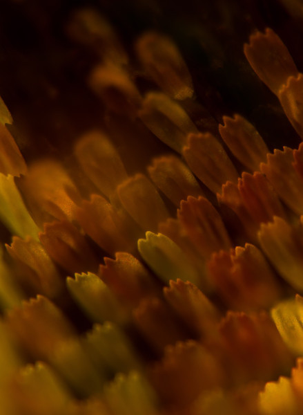 Close up of a swallowtail butterfly's feathers.<br /> Photo © Cindy Clark