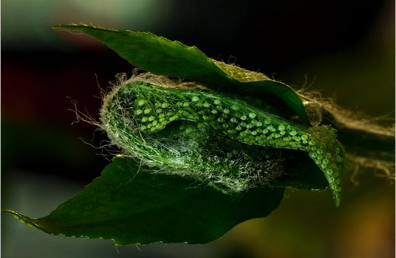 Fern spores on a house plant.<br /> Photo © Cindy Clark