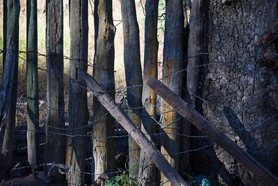 Hundred year old fence, Galiuro Mountains, AZ