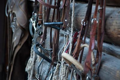 Horse bridles, reins, saddles and old barns, Safford, AZ