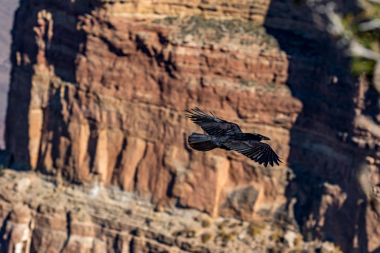 Grand Canyon IMG_2494