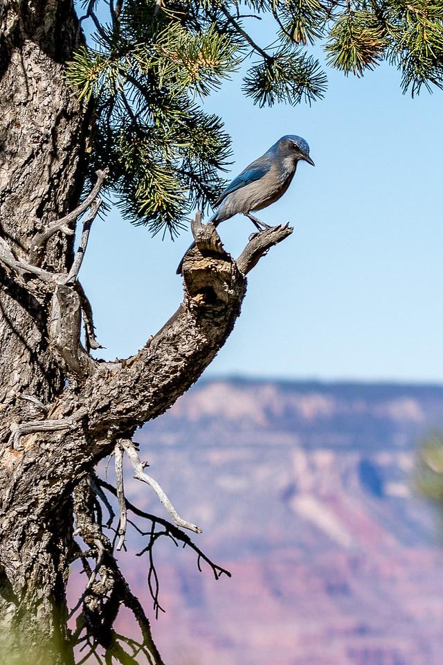 Grand Canyon IMG_2440