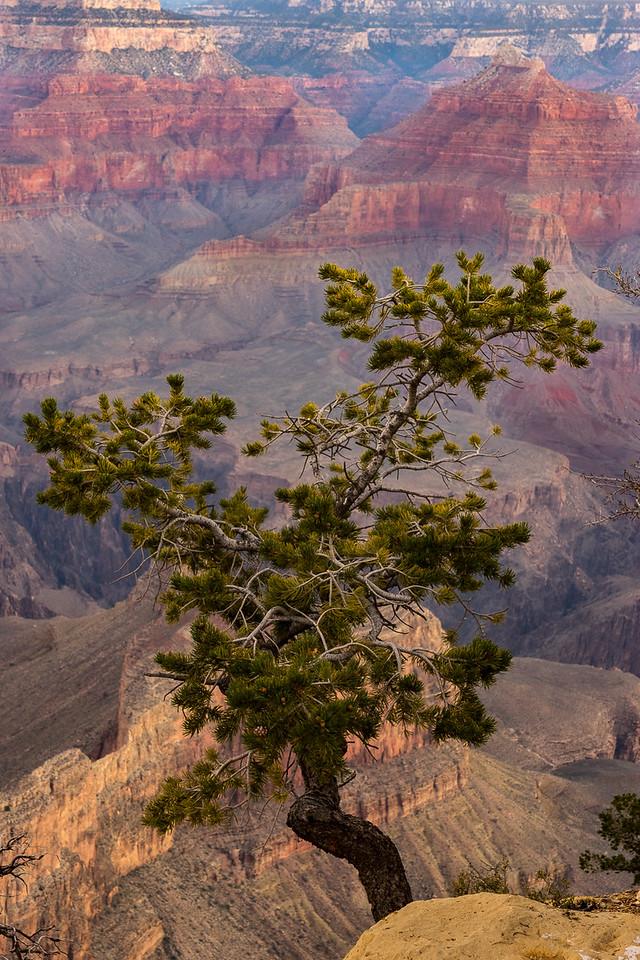Grand Canyon _DSC1044-HDR