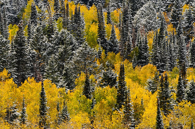 Taken in Utah during the fall of 2007 in the Wasach Mountains.