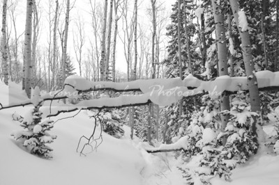 Taken in the winter of 2007 in Utah during a hike through the Mountains in Deer Valley.