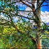 Defas Utah, Uinta Mountains