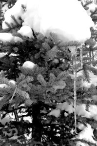 Taken in the Winter of 2007 in Utah during a hike in Park City.