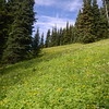 Alpine meadow near Garibaldi Lake.