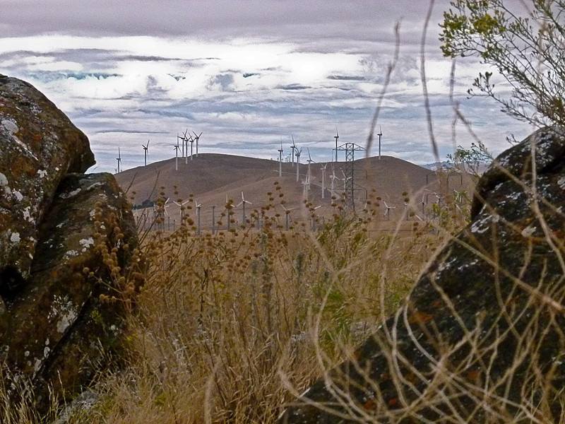 Pastoral, 2010<br /> Vaqueros Farms, Contra Costa Co., CA  9/19/10