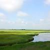 Marshlands in Muraviovka Park. № 2. (Amur Oblast, Russia)