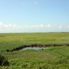 Marshlands in Muraviovka Park. № 1. (Amur Oblast, Russia)