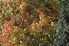 Herfst in Steendorp