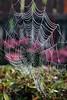 Spinneweb in de tuin