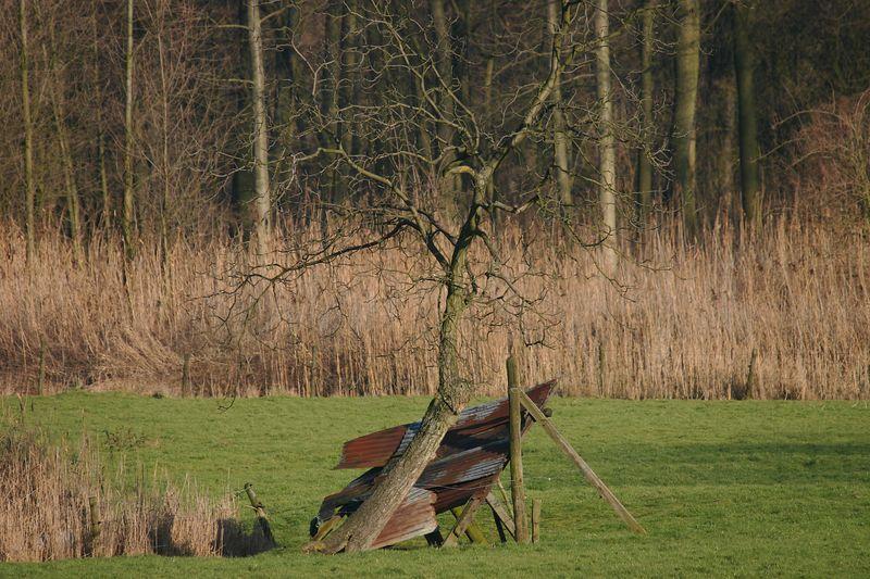 Steendorp - polder