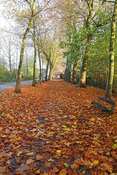 Herfst in Rupelmonde (12/11/2020)