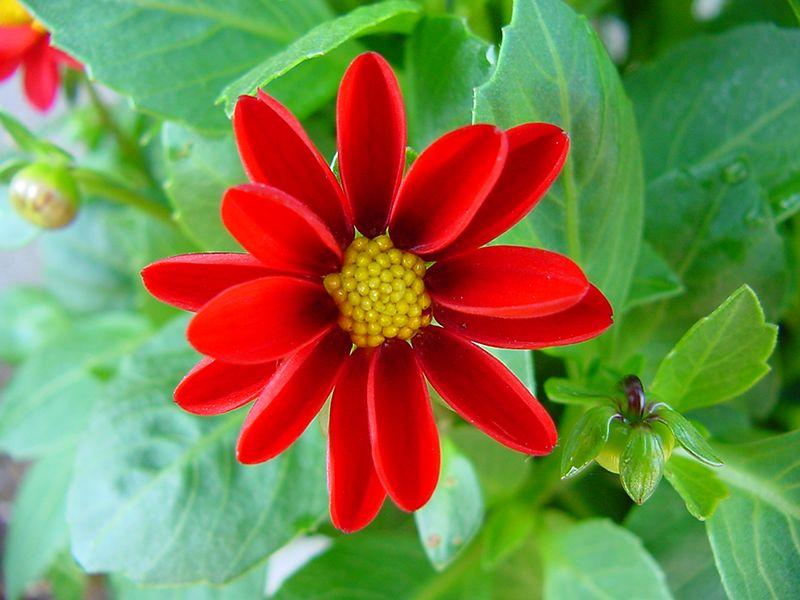 Macro - bloem /  Flower