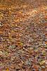 Herfst in Rupelmonde (05/11/2020)