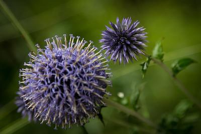 Alien Purple Flowers