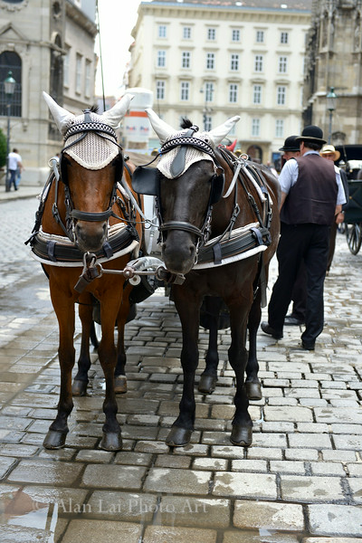 Poor horses of Vienna