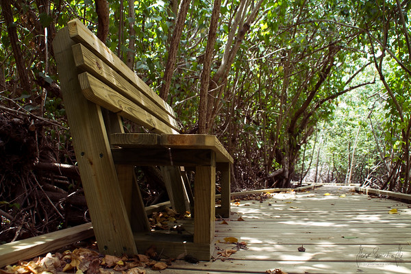 Francis bay trail