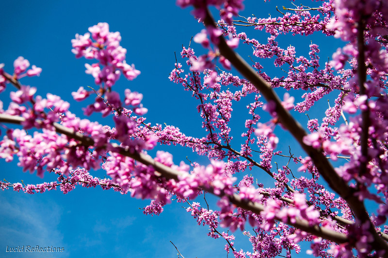 Spring explosion!
