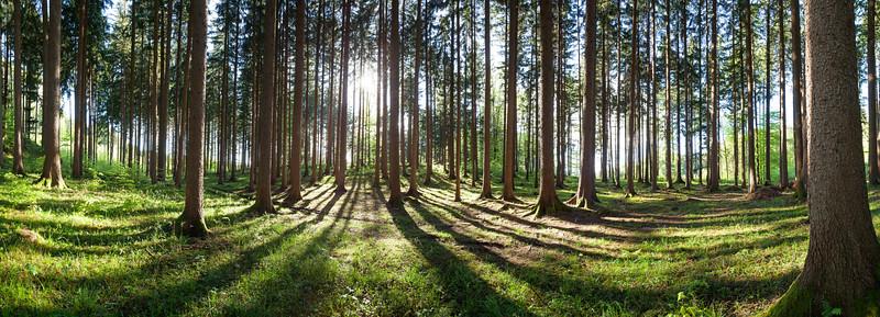Kugelwald oberhalb von Götzis