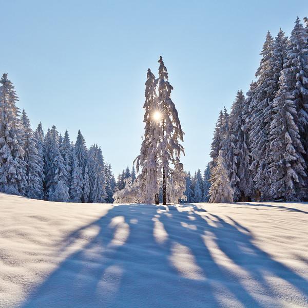Winter auf der Millrütte (Götzis)