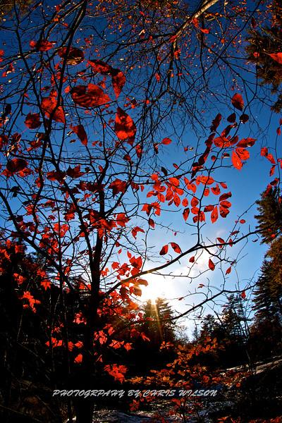 Western NC Fall colors_10-13-12_0023