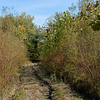 """From the main trail and pond, this was the unimproved """"proposed trail"""" into the interior from the the trail map slide. I followed it for awhile until it got wet and the mosquitoes were relentless, then returned to the improved trail."""