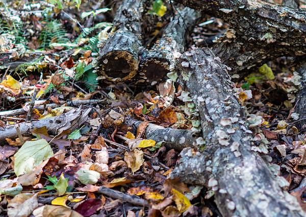 walk in Falcon Ridge woods