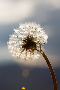 Solar Seeds