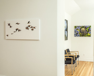 Geese over Ronnybrook appear to be flying right off the wall printed with white edge on canvas