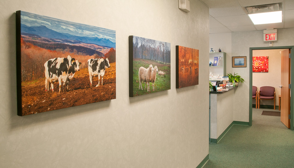 The natural world brings calm to patients and staff at Dr. Weinstein's office in Kingston, NY