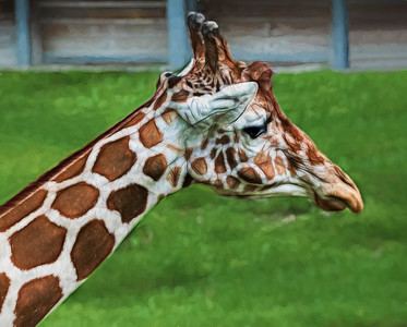 Giraffe Head Painted