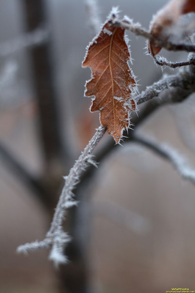 Photo of frozen fog clinging to a leaf at the Rieth Interpretive Center in Goshen, IN.