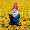 Gnome in some fall color