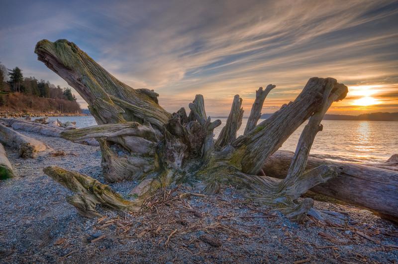 Mukilteo Beach Driftwood