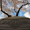 Title: Original Cherry Tree Plaque<br /> Date: March 2008