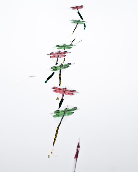 Title: String of Butterflies<br /> Date: April 2011