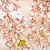 Title: Warm Blossoms<br /> Date: April 2010