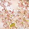 Title: Warm Blossoms<br /> Date: April 2010