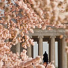 Title: Jeff Among the Blossoms<br /> Date: March 2009
