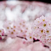 Title: Blooming<br /> Date: March 2009